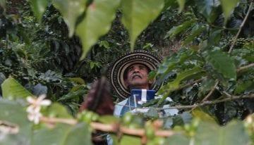 Origin Spotlight: Exploring Ecuador's Specialty Coffee