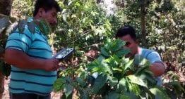 Combatiendo La Roya Con Aplicaciones Para Móviles En Guatemala