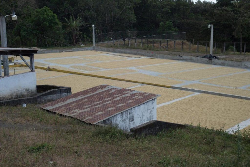 patio de secado