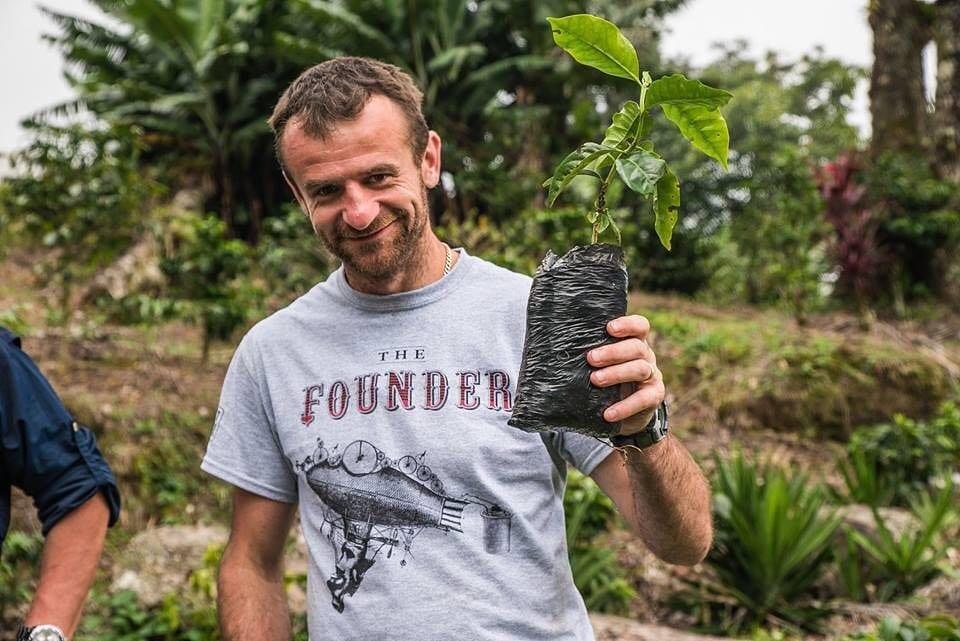 planting coffee