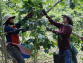 Del Grano a La Taza: ¿Cómo Cultivan Café los Productores?