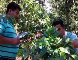 Combating Leaf Rust With Phone Apps in Guatemala