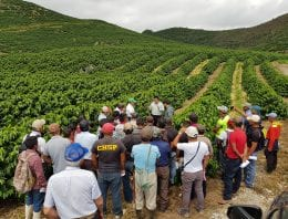 How Field Mapping Can Increase Profitability For Coffee Producers