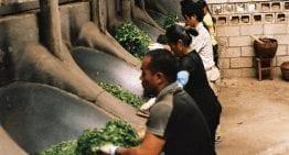 Pu'er: El Té Fermentado Que Todos Quieren Probar