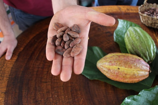 Cacao beans and cacao pods.