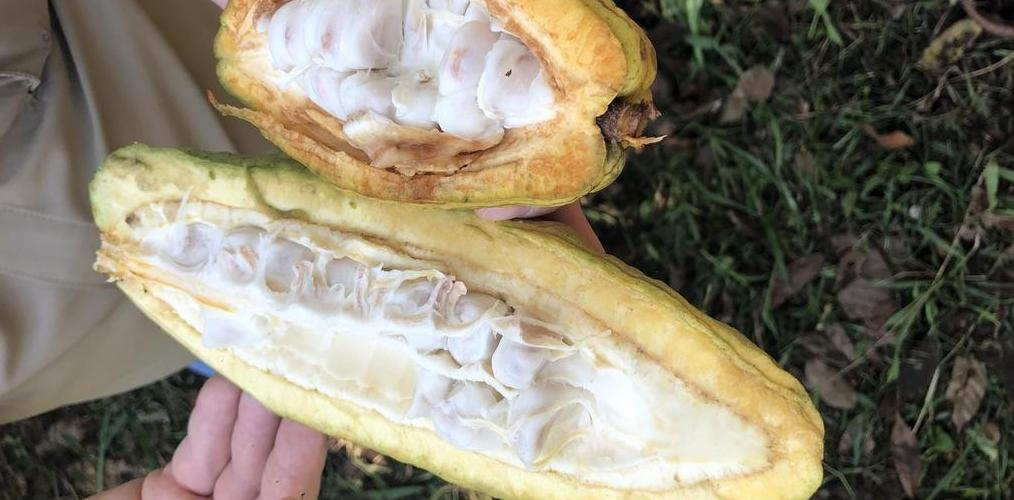 Raw Cacao Chocolate Health Foods Or Dangerous Habits