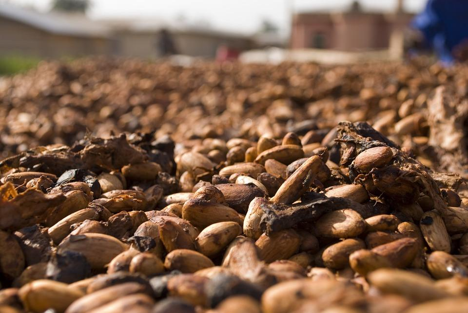 De-shelled, unroasted cacao beans.