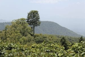 view from coffee farm