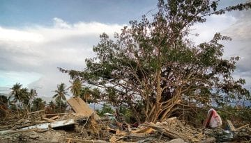 How Has The 2018 Sulawesi Disaster Affected Indonesian Coffee?