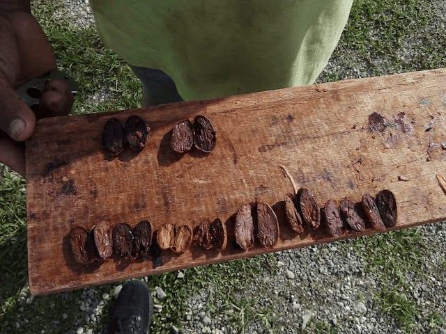 nibs de cacao cortados por la mitad