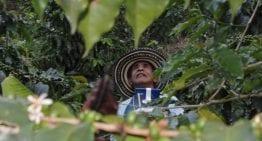Explorando El Café Especial de Ecuador