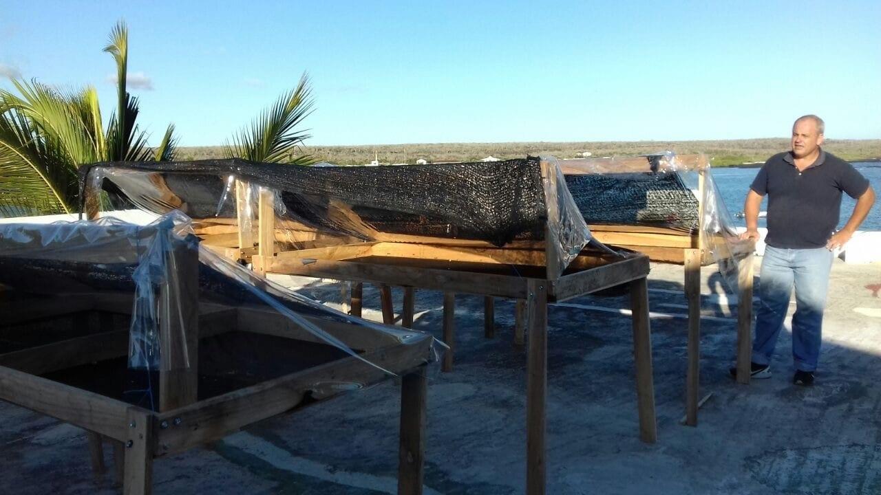 camas elevadas de secado