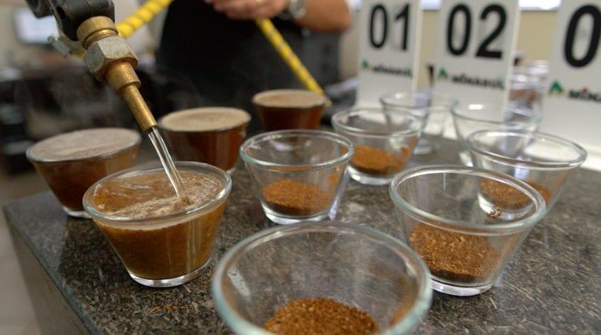 Cafes listos para catar en laboratorio