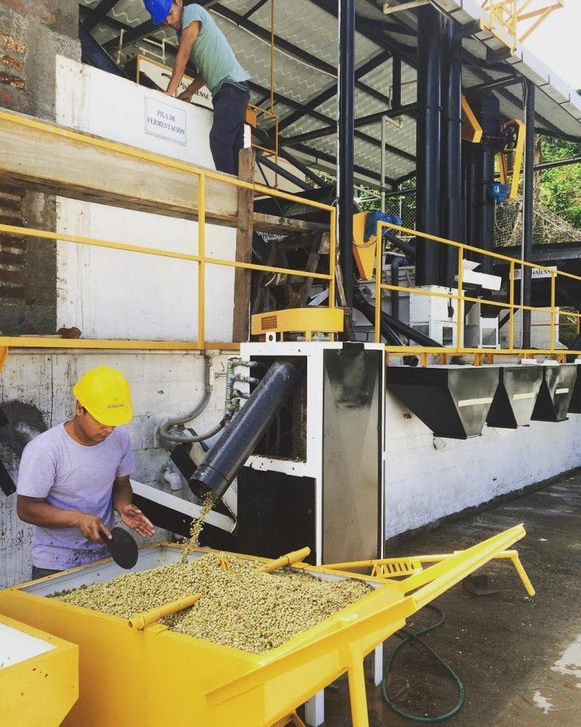 granos de cafe en proceso de lavado en Brasil