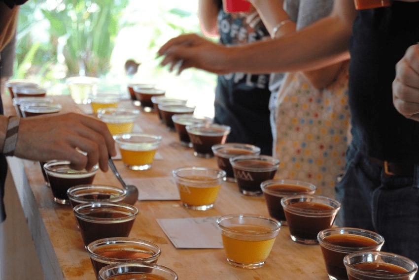 mesa de cata de cafes especiales