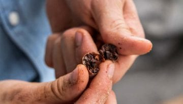 What's The Difference Between Cacao & Cocoa?