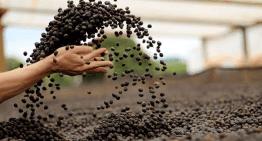 Café Y Sostenibilidad: ¿Cuáles Son Los Principales Problemas?