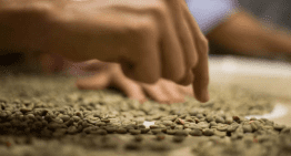 Kenia AA, Colombia Supremo: Entendiendo Cómo Se Califica El Café