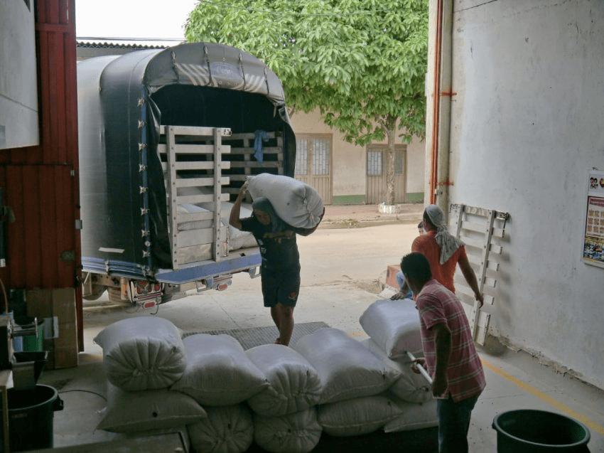 trabajadores cargan sacos de cafe a un camion