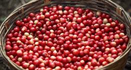 La Realidad De Producir Café De Especialidad En Fincas Pequeñas