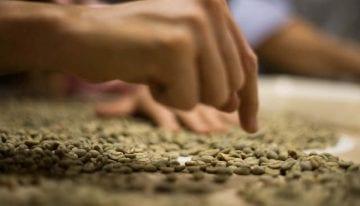Kenya AA, Colombia Supremo: Understanding Coffee Grading