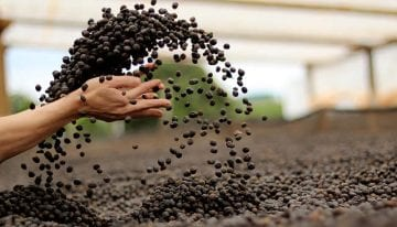 Sustainability in Coffee: What Are The Main Issues?