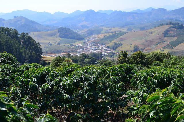 arboles de cafe en brasil