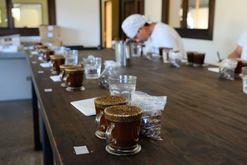 Cata de cafe en una finca de Guatemala