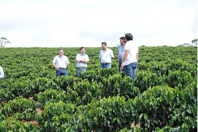 finca de cafe en Brasil