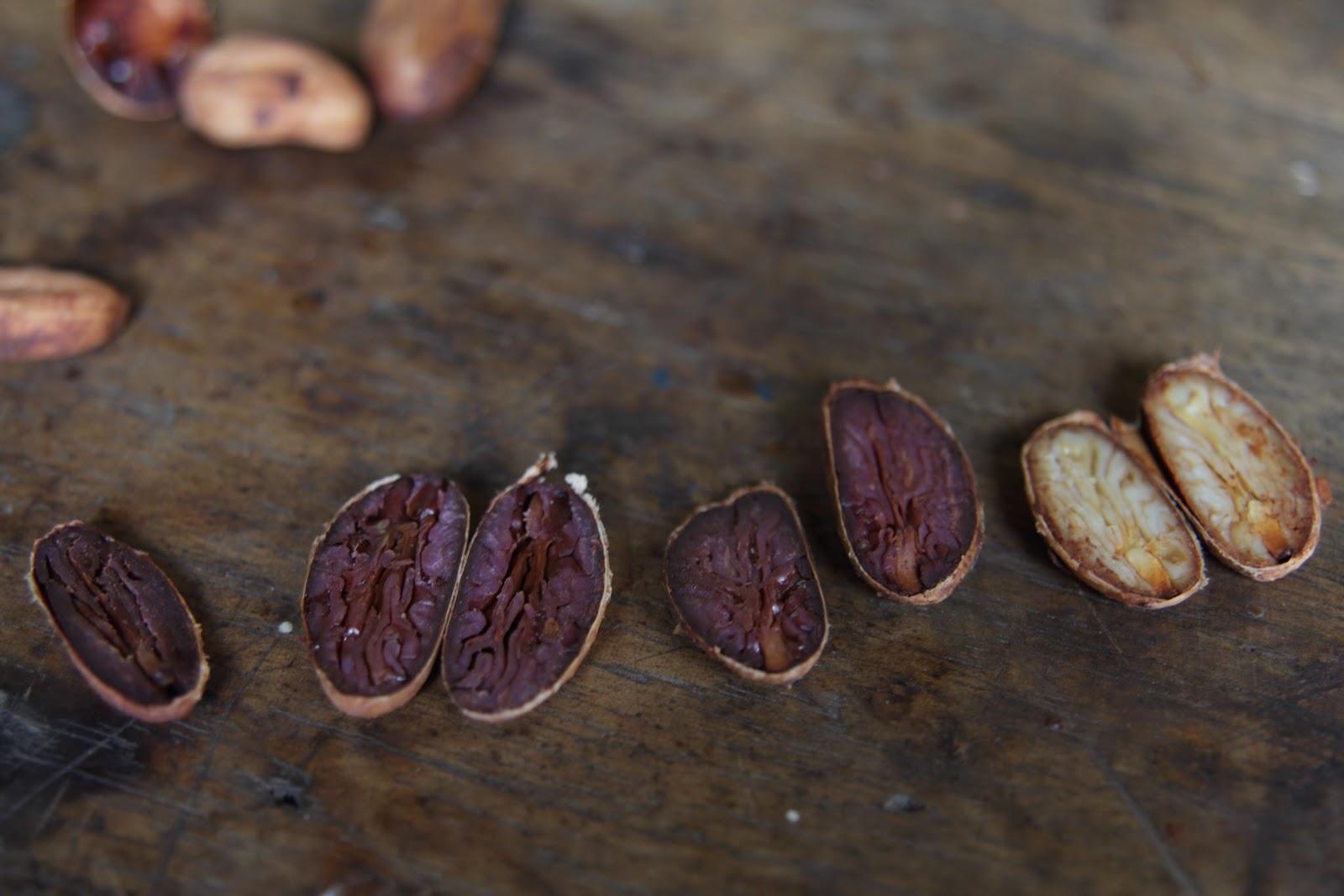 granos de cacao partidos por la mitad