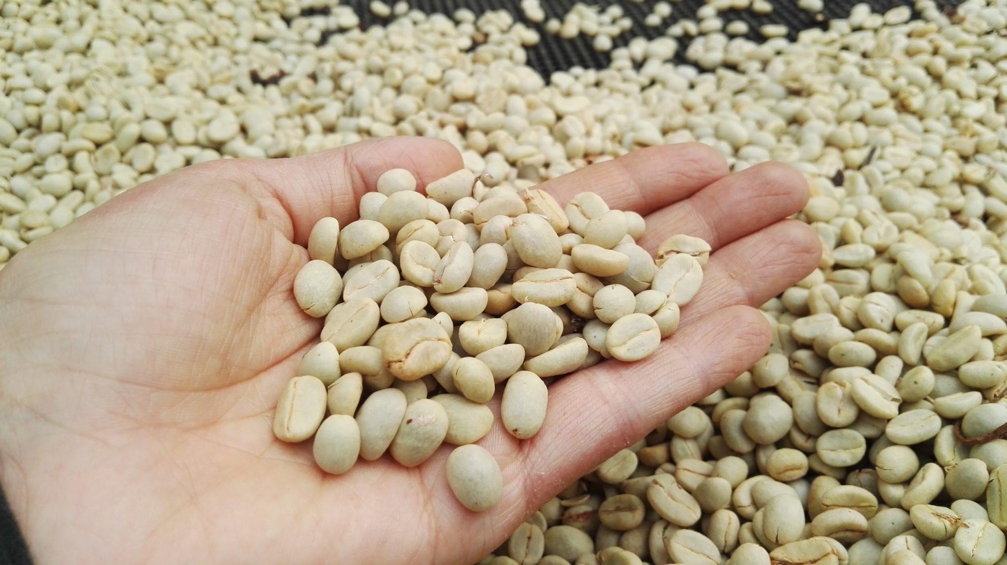 Granos de cafe de proceso lavado