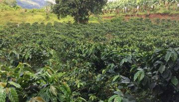 Understanding Specialty Coffee in The Philippines