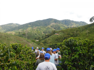 people walking in coffee farm