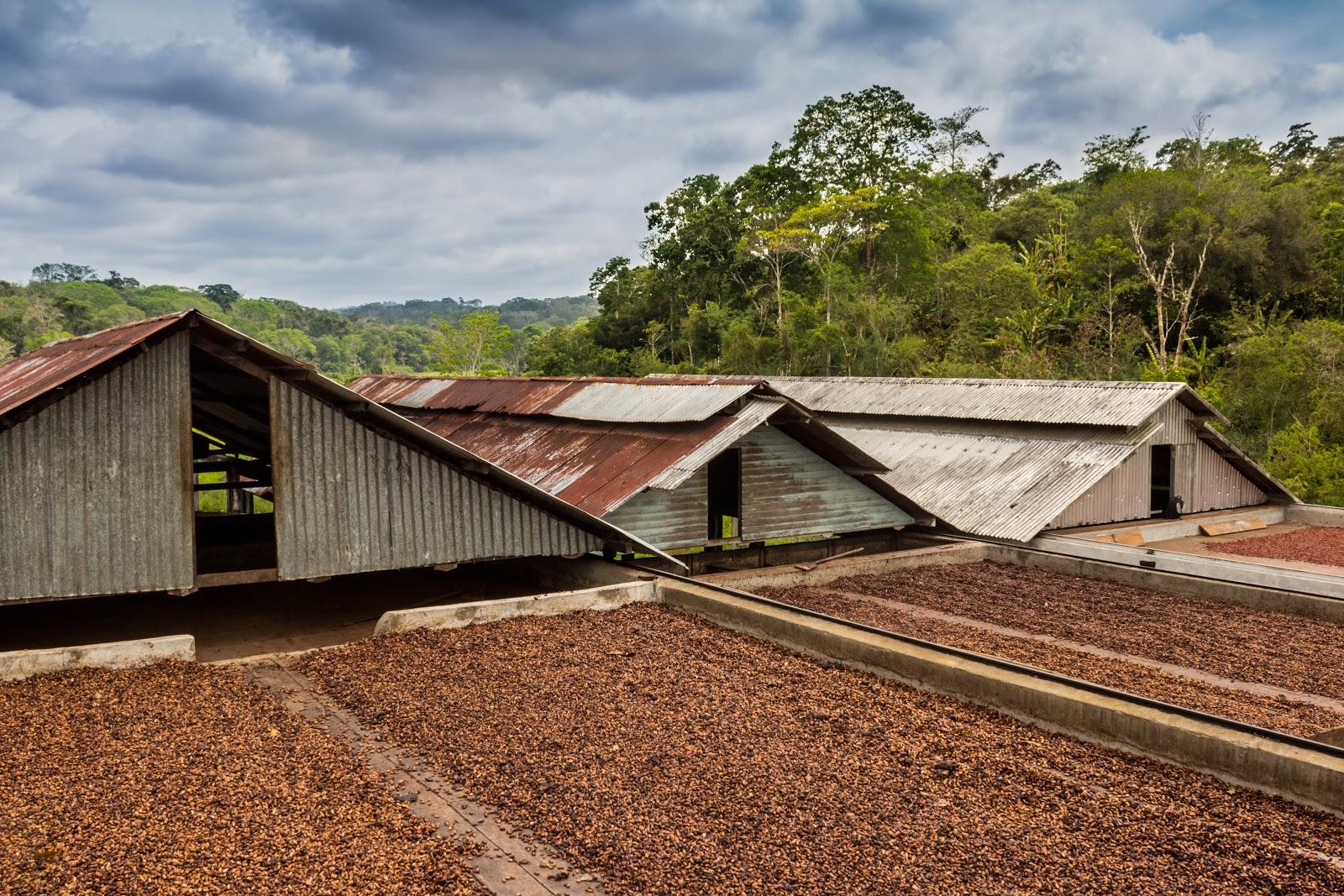 patio de secado para los granos de cacao