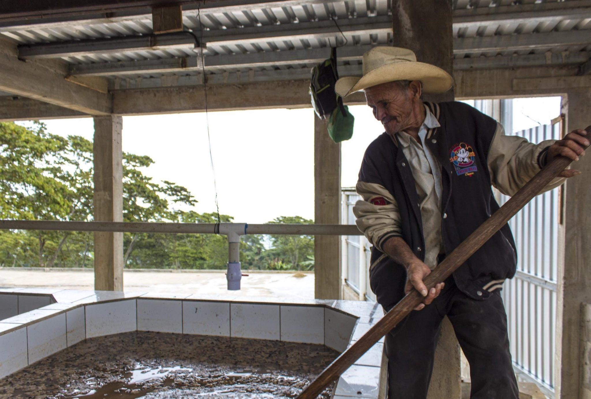 productor mueve cafes que se fermentan en un tanque en su finca.