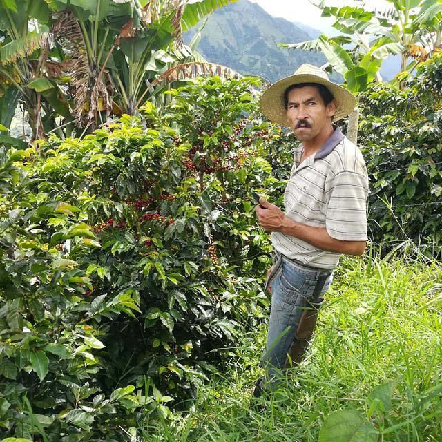 productor de cafe de la region del tolima