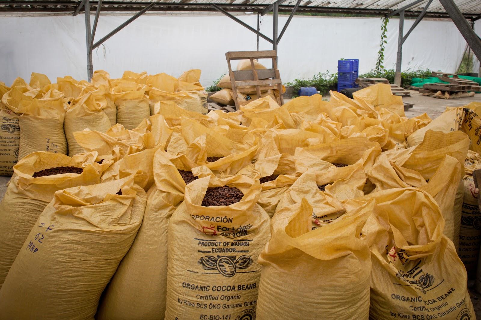 sacos de cacao listos para exportar