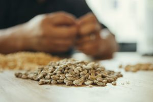 man selecting coffee beans