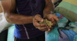 ¿Producir Café Significa Vivir en La Pobreza?