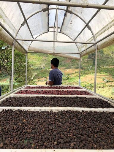 cafe de filipina se seca en camas elevadas