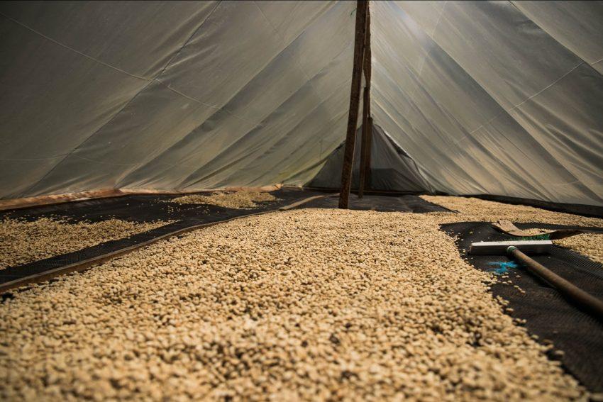 cafe secandose en camas elevadas