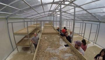 Explorando La Industria Del Café De Especialidad De Puerto Rico