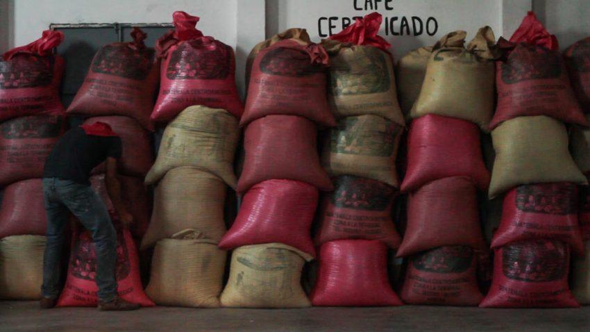 bolsas de cafe listas para transportar