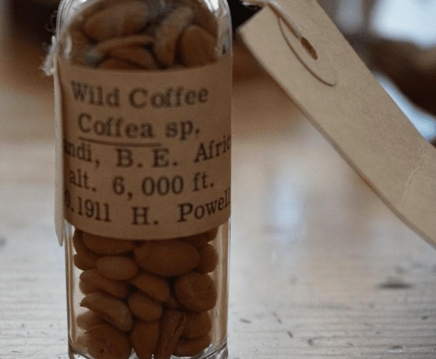 un frasco con granos de cafe