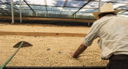 How to Measure Moisture in Parchment & Green Coffee Beans