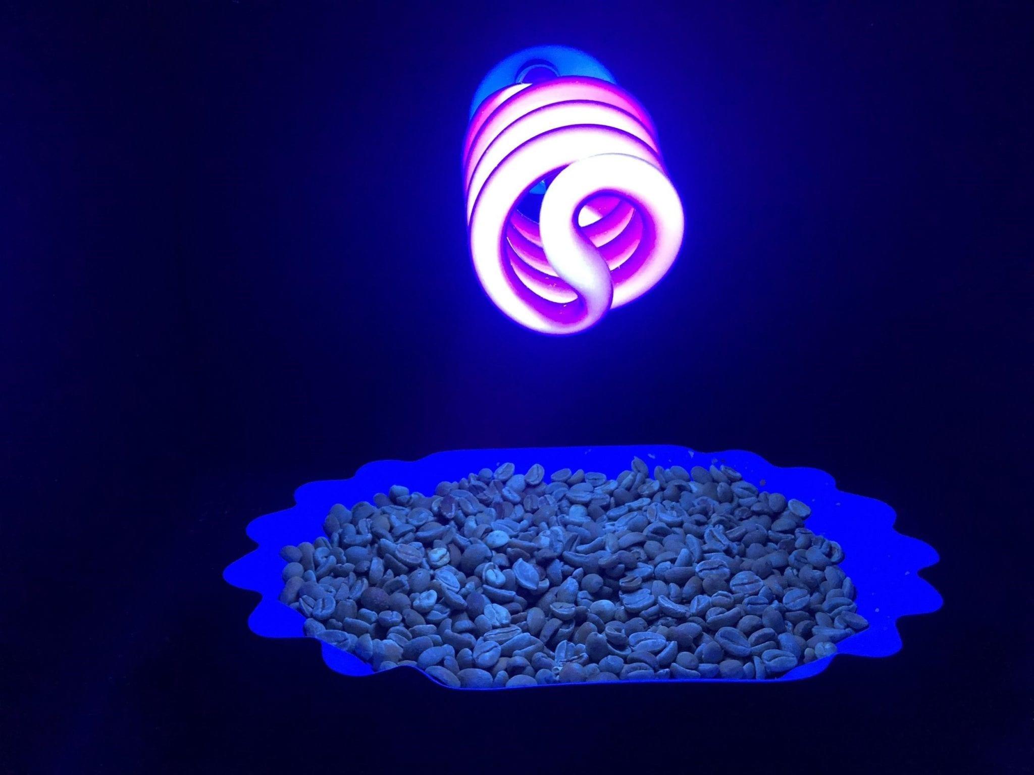 granos de cafe verde expuestos a luz uv