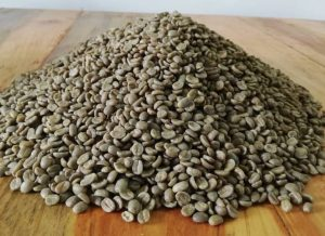 sample of green coffee beans in the table