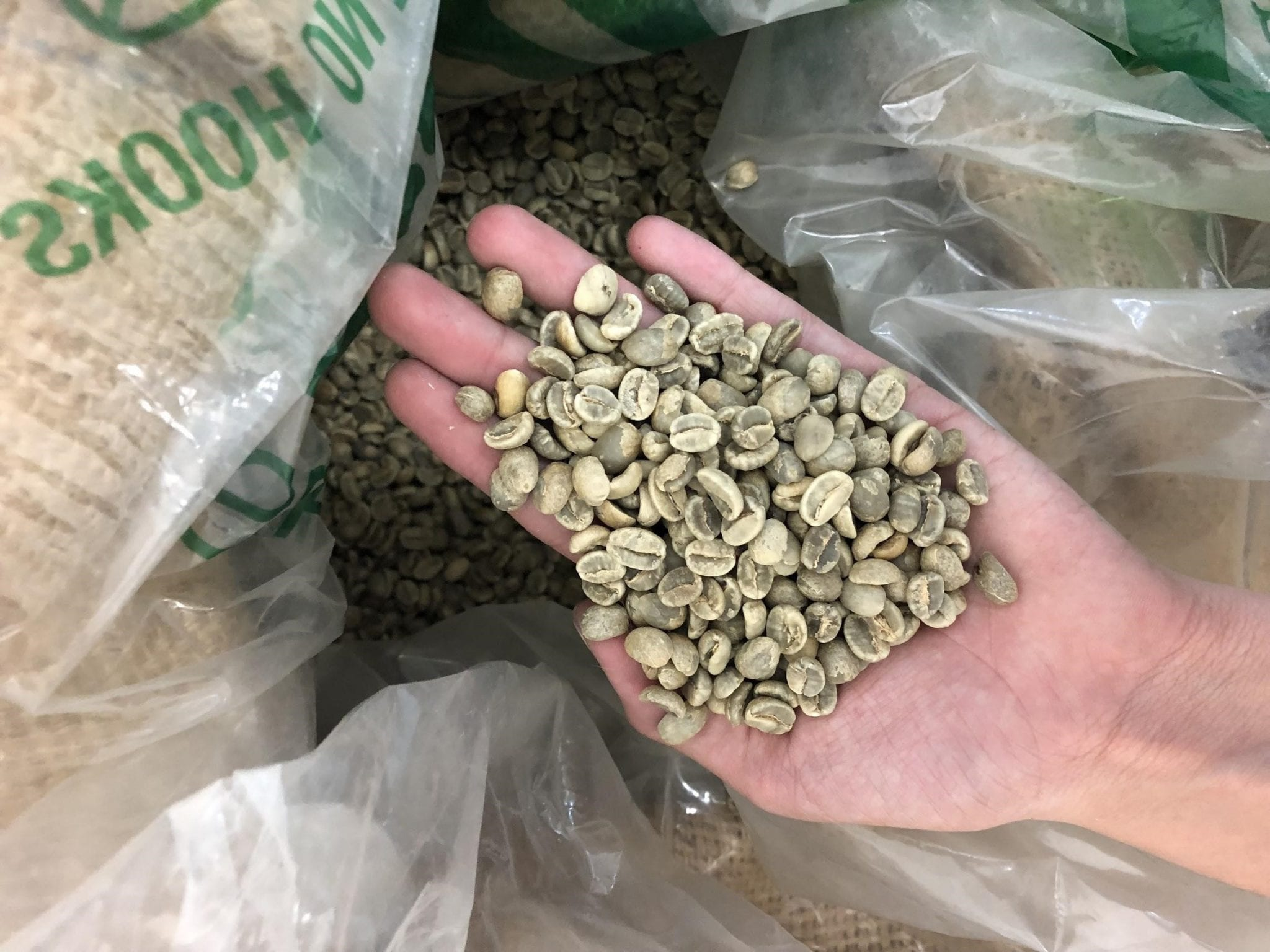 some green coffee on a farmer's hand