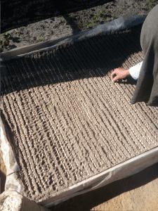 producer preparing a coffee nursery