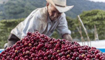 Esclavitud Y Café De Especialidad: La Historia Negra